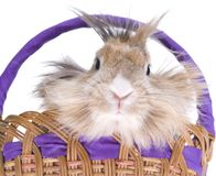 Rabbit in basket Royalty Free Stock Photo