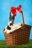 Rabbit in basket Royalty Free Stock Photos