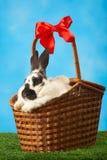 Rabbit in basket Royalty Free Stock Photos