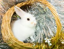 Rabbit in basket Royalty Free Stock Image