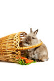 Rabbit with basket Stock Image