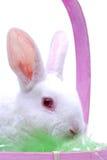 Rabbit in basket Stock Photo