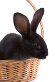 Rabbit in the basket Royalty Free Stock Photography