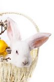 Rabbit in a basket Stock Images