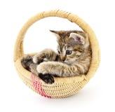Rabbit in basket Royalty Free Stock Image