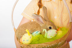 Rabbit in  basket easter eggs Royalty Free Stock Photo