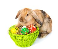 Rabbit with basket easter eggs. isolated on white background Stock Photo