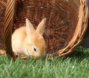 Rabbit in a basket Stock Photos