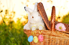 Rabbit in the basket on meadow and easter eggs Royalty Free Stock Photos