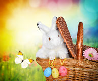 Rabbit in the basket on meadow and easter eggs Stock Photography