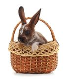 Rabbit in the basket. Rabbit in the basket on a white background Royalty Free Stock Images