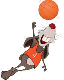 Rabbit the basketball player cartoon Stock Image