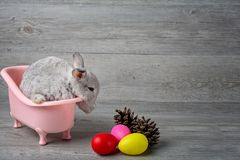 Rabbit in the bathtub placed on a wooden floor. Happy easter Fancy rabbit on a wooden background. Cute little rabbit on a pink bat royalty free stock image