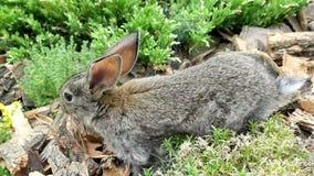 Rabbit is Beautiful Animal of Nature stock footage