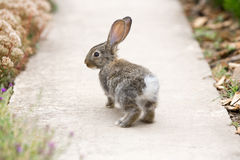 Rabbit is Beautiful Animal of Nature Stock Images