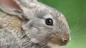Rabbit. Beautiful animal of wild nature stock video
