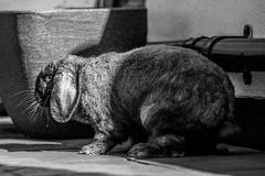 Rabbit being fed Royalty Free Stock Photo