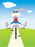 Rabbit on a bicycle Stock Photography