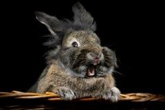 Rabbit on a black background stock photography