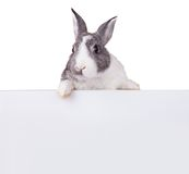 Rabbit with blank sheet on white background Royalty Free Stock Images