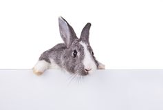 Rabbit with blank sheet on white background Royalty Free Stock Photos
