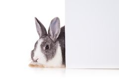 Rabbit with blank sheet on white background Royalty Free Stock Photo