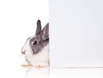 Rabbit with blank sheet on white background Stock Photography