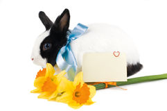 Rabbit with blue ribbon, card and bouquet of yello royalty free stock photo