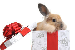 Rabbit in  box Stock Photo