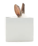 Rabbit in box. Stock Photos