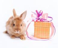 rabbit and box Royalty Free Stock Image