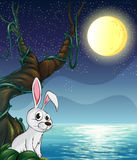 A rabbit and the bright full moon Stock Images