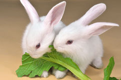 Rabbit brother royalty free stock images