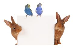 Rabbit and budgie Royalty Free Stock Photos