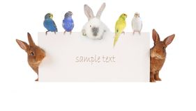 Rabbit and budgie Royalty Free Stock Images