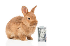 Rabbit and a bundle of money Royalty Free Stock Photography