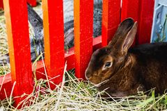 Rabbit or bunny in cell on farm Stock Photography