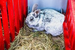 Rabbit or bunny in cell on farm Stock Photo