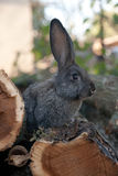 Rabbit bunny in the garden Royalty Free Stock Photography