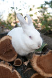 Rabbit bunny in the garden Royalty Free Stock Images