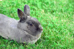 Rabbit bunny Stock Photography