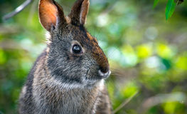 Rabbit Bunny Head Profile Royalty Free Stock Images