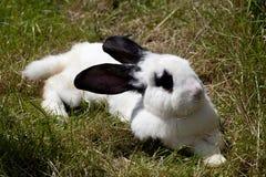 Rabbit bunny lay in grass Royalty Free Stock Photos