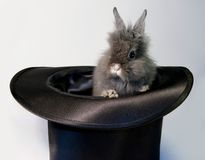 Rabbit bunny in top hat Royalty Free Stock Photo