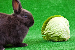 Rabbit and cabbage Royalty Free Stock Photography
