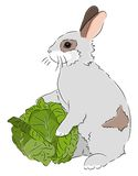 Rabbit with Cabbage Stock Photo