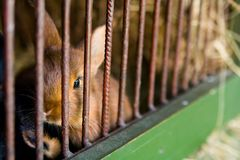 The rabbit in cage Royalty Free Stock Image