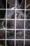 Rabbit in the cage Royalty Free Stock Photography