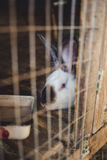 Rabbit in the cage. Stock Images