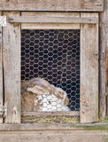 Rabbit in cage Stock Image